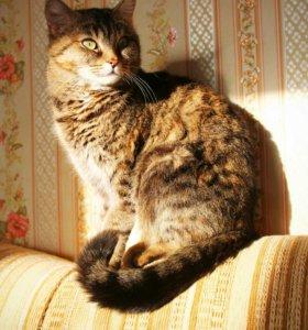 Кошка Кира в добрые руки!