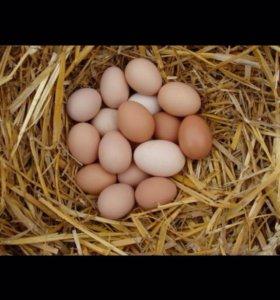 Домашние яйца из деревни