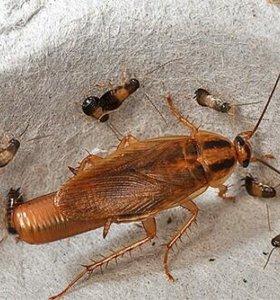 Уничтожение насекомых клопов тараканов и т..д