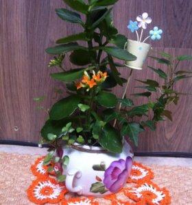 Мини-садик В гостях у бабушки 👵👴