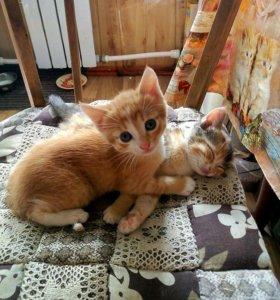 Отдадим чудесных котяток в добрые руки