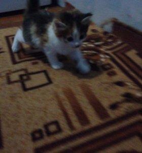Котята в Ачинске