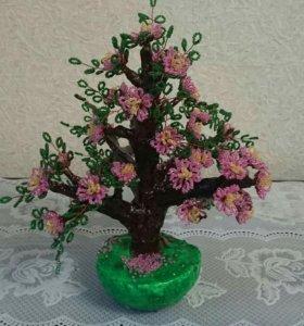 Сакура цветущая