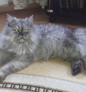 Найден красивый кот перс на Н.Городке!ждет хозяина
