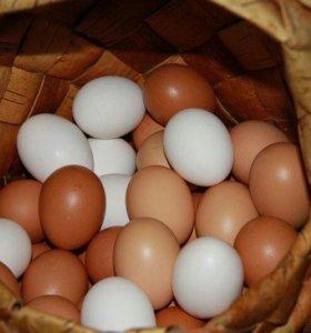 Яйца от деревенских кур