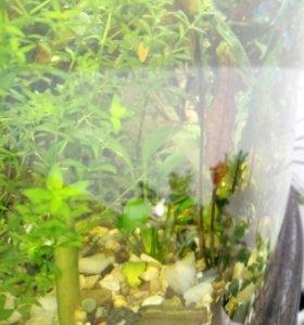 Аквариумные растение