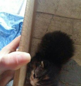 Котёнок (предположительно девочка) и кошка