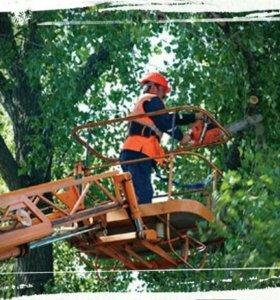 Спиливание деревьев пильщики