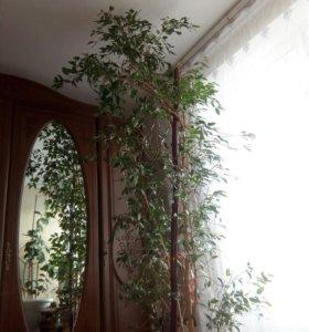 Дерево для офиса