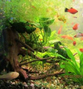 Рыба,растения,креветки
