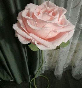 Роза - гигант😄
