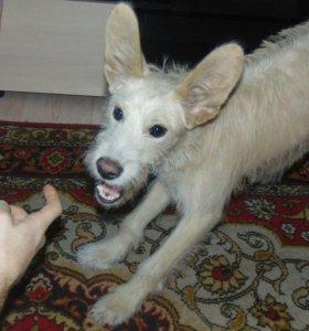 Собака 8-9 месяцев