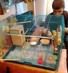 Попугайчики с клеткой