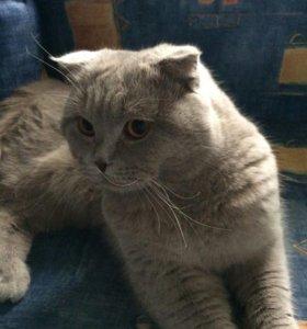 Животные кот на вязку