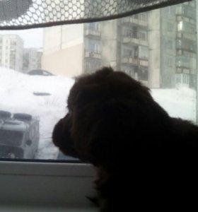 Собака дворняшка