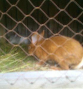 Кролики от 2 месяцев