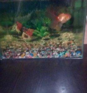 Аквариум для рыбок 25 литров