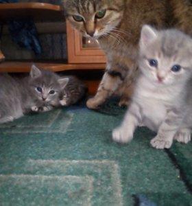 Котики и кошечка
