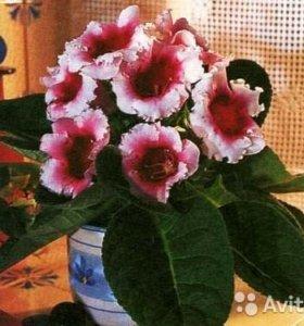 Комнатные цветы, саженцы деревьев