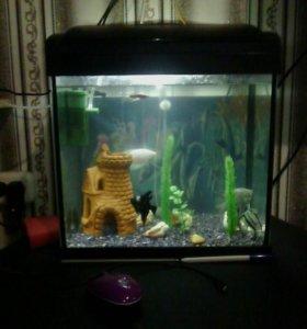 Аквариум на 30л+рыбки,компрессор,фильтр.