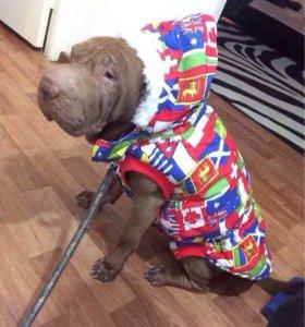 Продам куртку для собаки(шарпей)