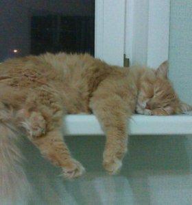 Кот мышелов зовут Басик