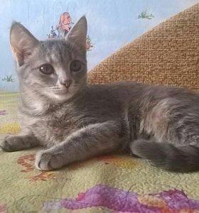 Кошечка Маруся бесплатно