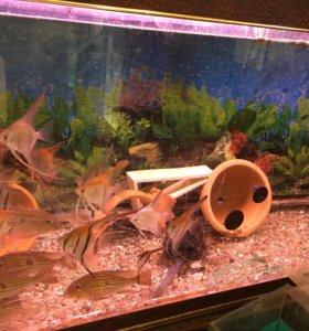 Два аквариума 350 и 500 литров