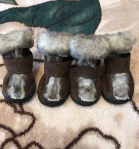 Обувь для собак,размер 2