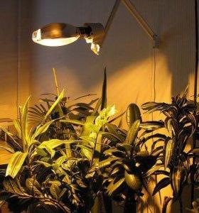 Для досветки рассады и растений Дназ Эпра