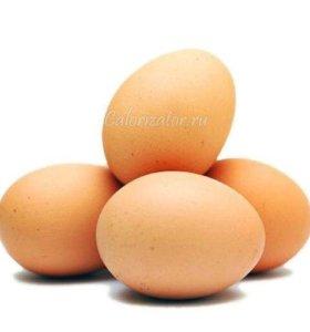 Домашние свежие яйца
