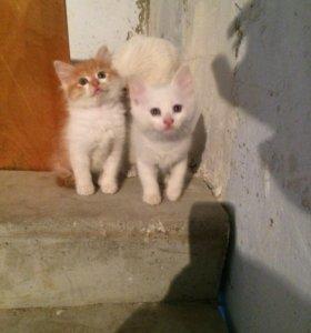 Котята ищут своих хозяев.