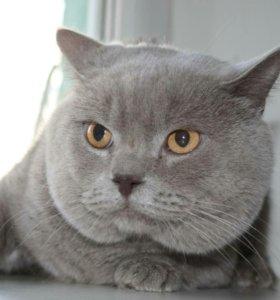 Лиловый кот на вязку