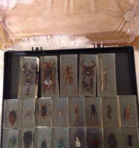 Настоящая коллекция пауков