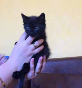 Отдам в хорошие руки котенка девочка