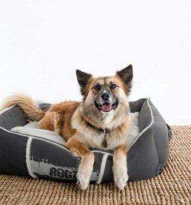 Лежак для собак Lounge Pod