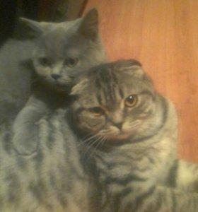 Передержка кошечек,котиков.