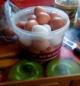 Яйцо куриное столовое