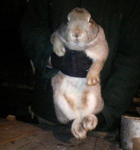 Продам годовалых кроликов самки
