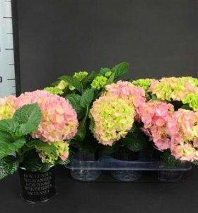 Цветы для дома