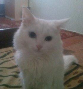 Кошка добрая ласковая