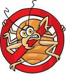 Уничтожение насекомых:тараканов, клопов