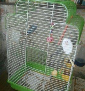 2 попугая с клеткой