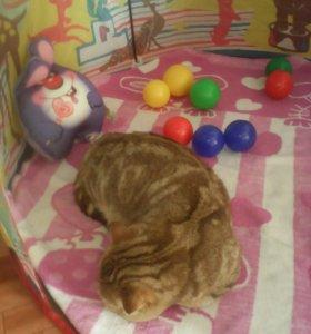 Кот(вязка)
