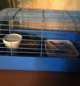 Клетка для кролика(бесплатно отдам поилку и туалет