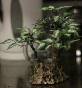 Бонсай декоративное дерево