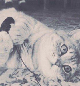Вязка с котиком