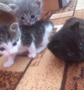 Дарю котят