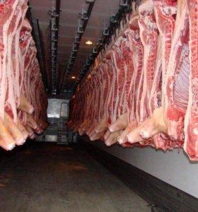Свинина от производителя
