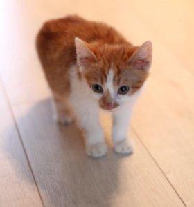 Котёнок (мальчик) в добрые руки